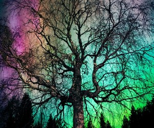 aurora borealis, tree, and beautiful image