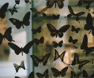 beautiful, vintage, and butterflys image