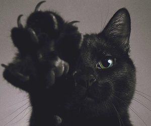 animal, black, and gato image