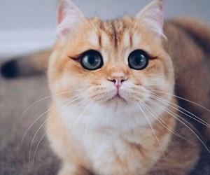 cat, animals, and eyes image