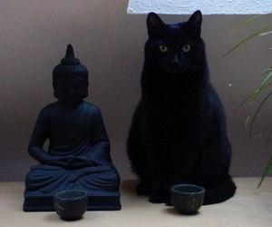 cat, black, and Buddha image