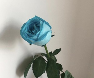 blue, blue rose, and grunge image