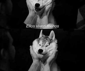 amor, frases, and 🐕 image