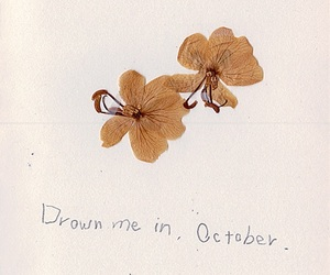 flowers, quotes, and autumn image
