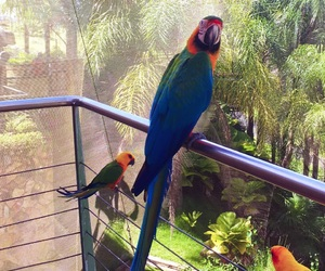birds, nature, and puerto rico image