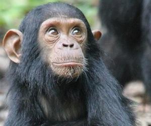beach vacation, african safari, and rwanda gorilla trekking image