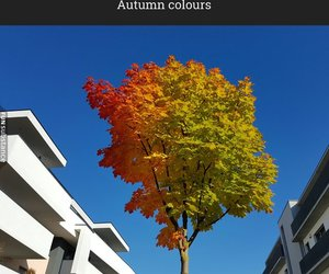 autumn, humor, and awesome image