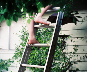 green and ladder image