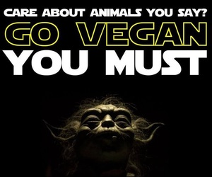 vegan and do you care image