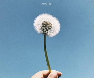 aesthetic, breathe, and flower image
