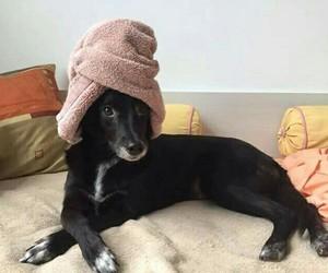 cuteness, kawaii, and dog image