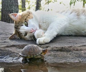 cat and turtle image