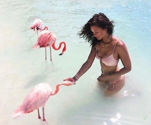 summer, flamingo, and goals image