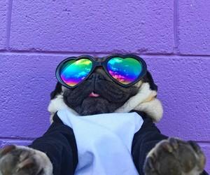 dog, sunglasses, and cute image