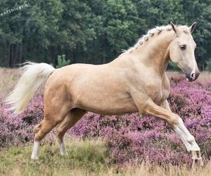 beautifull, horse, and lo image