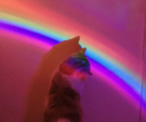 hot pink, kitty, and rainbow image