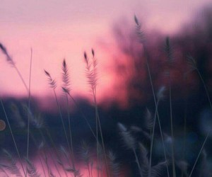 wallpaper, pink, and nature image