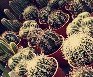 cactus, green, and Hot image