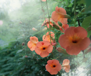 color, flowers, and garden image