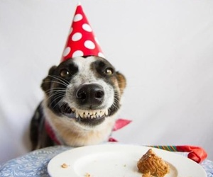 dog, birthday, and funny image