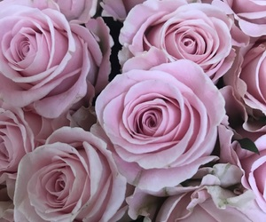pink, rose, and tumblr image
