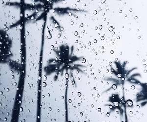rain, palm, and palm tree image