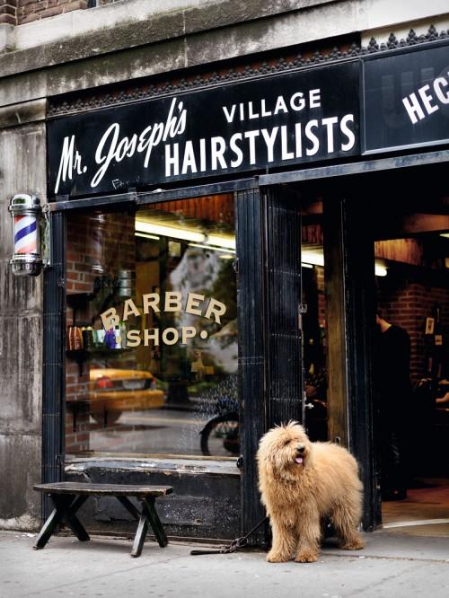 dog, photography, and shop image