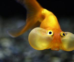 fish, animal, and funny image