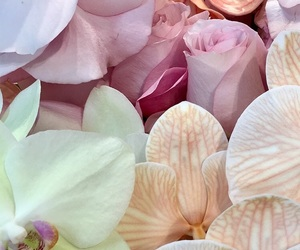 flowers, pastel, and wallpaper image