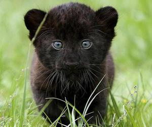 animal, black, and baby image