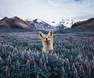 animal, flowers, and mountains image
