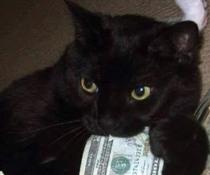 cat, icon, and money image