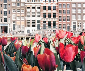 san francisco, tulips, and house goals image