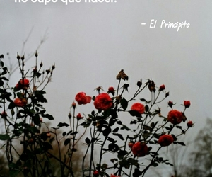 flores, frases, and principito image