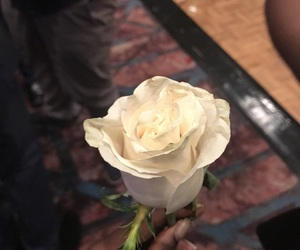 flower, Relationship, and rose image