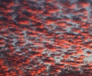 red, fall, and red sky image