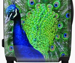 peacock, travel, and suitcase image
