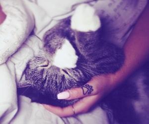 cat, kitten, and tattoo image