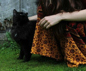 animals, black, and black cat image