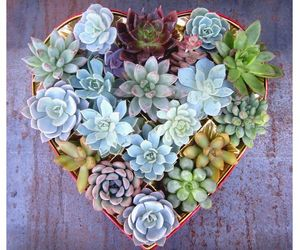 beauty, flowers, and heart image