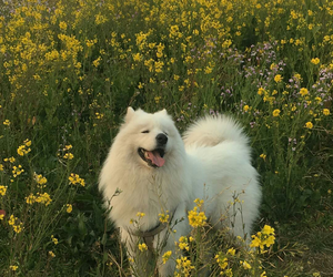dog, flowers, and aesthetic image
