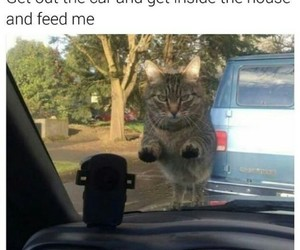 cats, funny, and food image