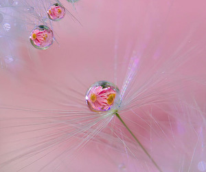 abstract, nature, and pink image