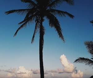 beach, trees, and clouds image