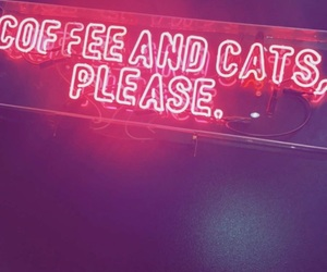 cafe, pink, and cats image
