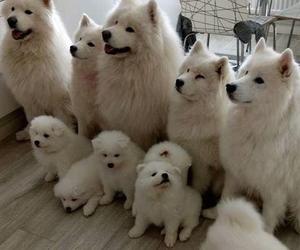dog, animal, and puppies image