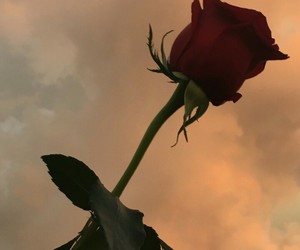 rose, aesthetic, and sky image