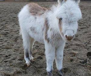 baby animals, cute animals, and donkeys image