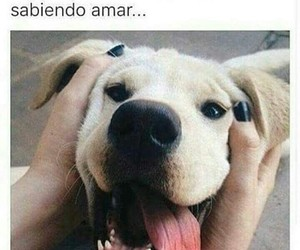 dog, puppy, and frases image