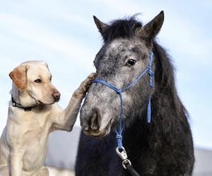 animal, dog, and friendship image